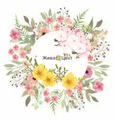 Жива_цвет